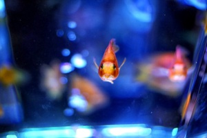 john e mary - pesci rossi